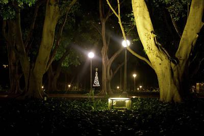 Photograph - Little Christmas Tree by Miroslava Jurcik