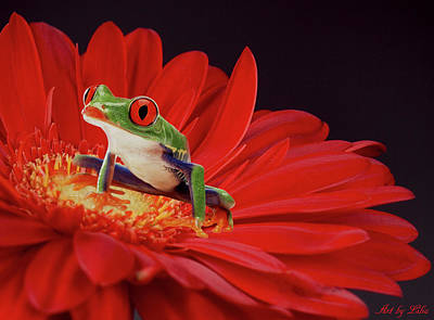 Photograph - Little Cute Froggy On The Flower by Lilia D