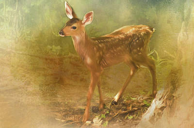 Photograph - Deer Little One by Marilyn Wilson