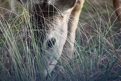 Photograph - Little Doe by Captain Debbie Ritter