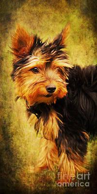 Little Dog II Art Print by Angela Doelling AD DESIGN Photo and PhotoArt
