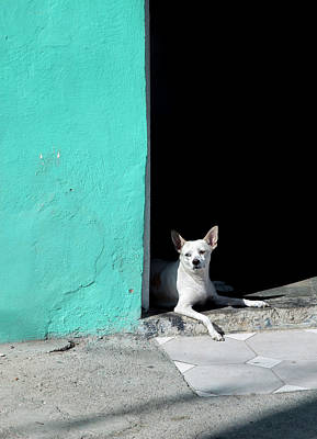 Photograph - Little Dog In Doorway Havana Cuba by Charles Harden