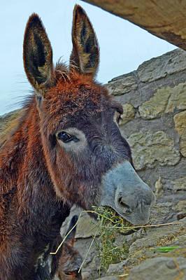 Little Donkey. Original by Andy Za