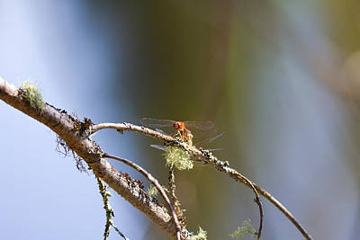 Little Dragonfly Art Print by Gary Smith