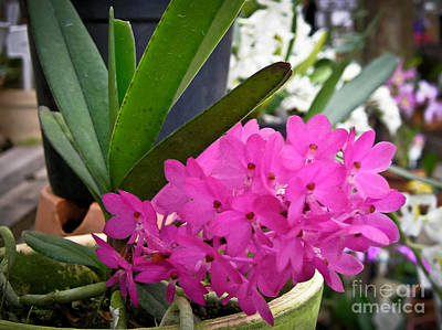 Orchids Photograph - Little Dreams 2 by Dora Miller