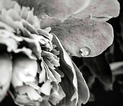 Photograph - Little Drop by Adam Vance