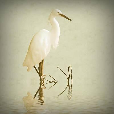 Stork Digital Art - Little Egret 2 by Sharon Lisa Clarke