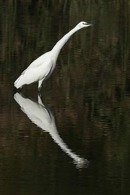 Photograph - Little Egret - Egretta Garzetta by Prashant Meswani