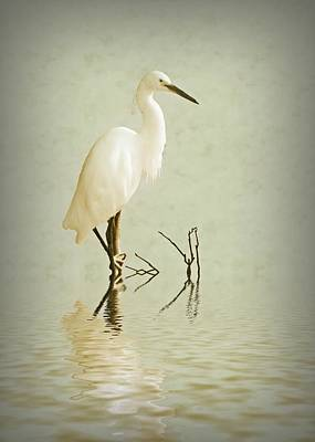 Egret Digital Art - Little Egret by Sharon Lisa Clarke