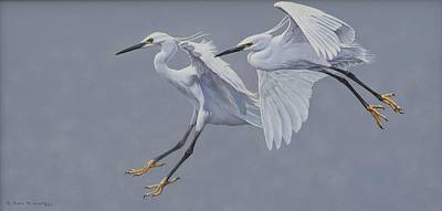 Painting - Little Egrets In Flight by Alan M Hunt