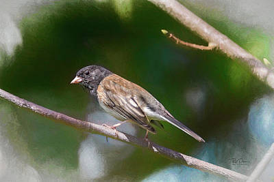 Photograph - Little Finch by Bill Posner