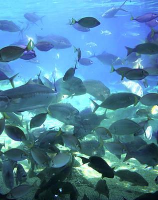 Photograph - Little Fish Having A Feast by Miroslava Jurcik