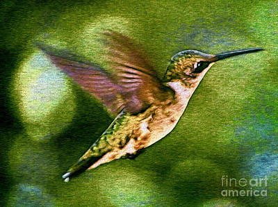 Photograph - Little Flier by Sue Melvin