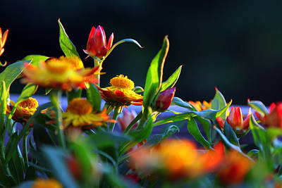 Photograph - Little Flowers by David Ralph Johnson