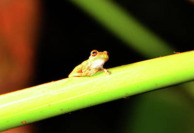 Photograph - Little Frog by David Lee Thompson