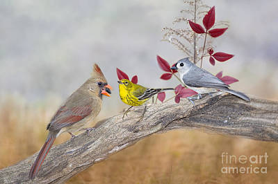 Tufted Titmouse Photograph - Little Gathering Of Feathered Friends by Bonnie Barry