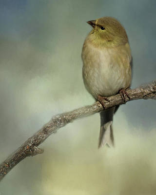Photograph - Little Gold Finch by Lana Trussell