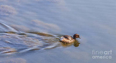Digital Art - Little Grebe Tachybaptus Ruficollis by Liz Leyden
