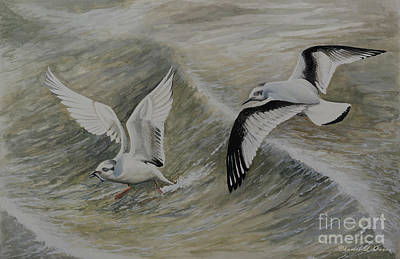 Painting - Little Gull by Charles Owens