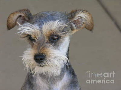 Ruff Mixed Media - Little Guy by Diane Greco-Lesser