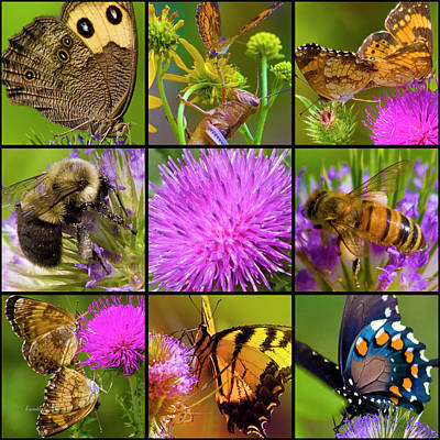 Bumblebee Photograph - Little Guys  by Betsy Knapp