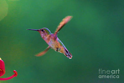 Train Photography - Little Helicopter wings by Jeff Swan