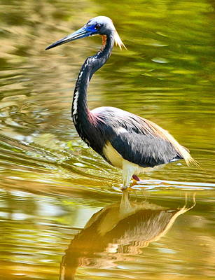 Bird Photograph - Little Heron Lunch Date by Emily Stauring