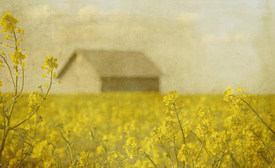 Yellow Flower Photograph - Little House On The Prairie by Rebecca Cozart