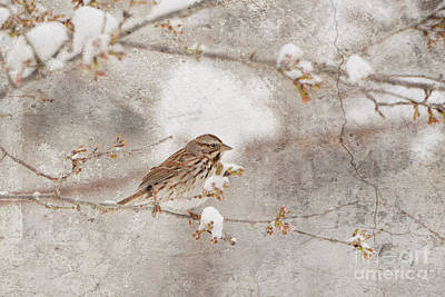 Photograph - Little House Sparrow by Lila Fisher-Wenzel