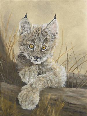Little Inquisitive One - Canadian Lynx Original