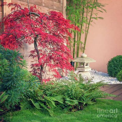Japanese Maple Photograph - Little Japan by Delphimages Photo Creations