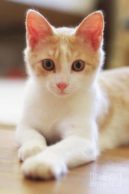 Photograph - Little Kitty by Mark Miller