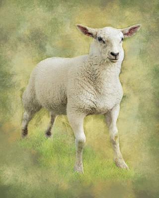 Digital Art - Little Lamb by Mihaela Pater