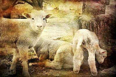 Photograph - Little Lamb by Diana Angstadt