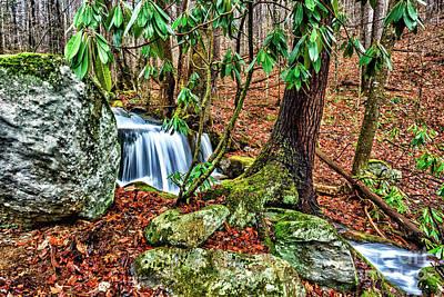 Bath Time - Little Laurel Branch by Thomas R Fletcher