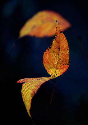 Photograph - Little Leaves by Toni Hopper