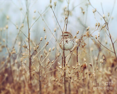 Photograph - Little Legs In The Big Outdoors by Kerri Farley