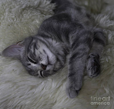 Photograph - Little Lucius by Donna L Munro