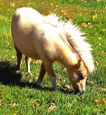 Photograph - Little Man Miniature Horse by Barbara Snyder
