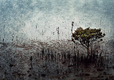 Little Mangrove Art Print by Margaret Hormann Bfa