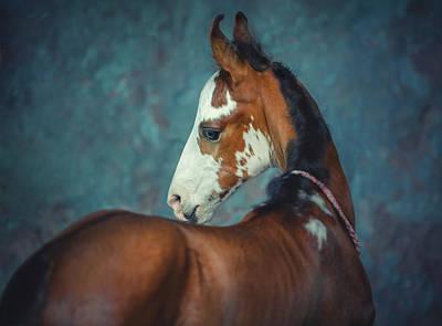 Photograph - Little Marwari by Ekaterina Druz
