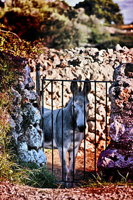 Photograph - Little Mediterranean Donkey Dream Color Hdr By Pedro Cardona by Pedro Cardona Llambias