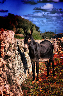 Photograph - Little Mediterranean Donkey Dream Color With White Eyes And Belly  Hdr By Pedro Cardona by Pedro Cardona Llambias