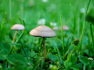 Photograph - Little Mushrooms by Richard Reeve