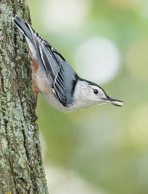 Photograph - Little Nutty Bokeh by Ian Sempowski