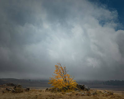 Fall Colors Photograph - Little Oak In A Big Storm by Joseph Smith