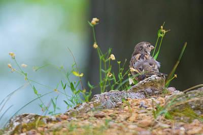 Photograph - Little Observer by Elvira Pinkhas