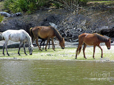 Photograph - Little One Behind The Mares by D Hackett