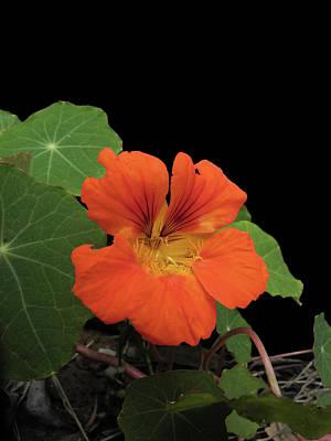 Photograph - Little Orange by Mark Blauhoefer