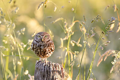 Cute Bird Photograph - Little Owl Big World by Roeselien Raimond
